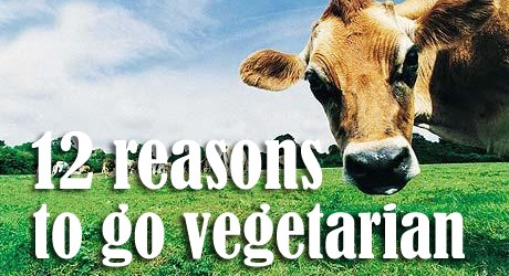 the reasons for going vegetarian Of course there are also health and environmental reasons to go vegan, but for me it was one of the main reasons to go vegan and to stay vegan all sentient creatures should have the right to live a life in peace and freedom.